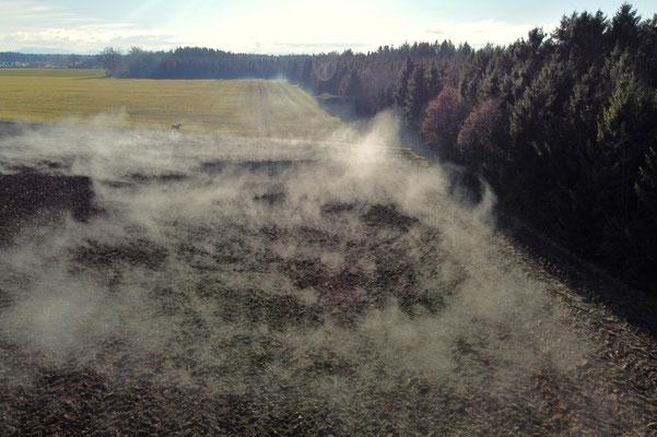 Vogelperspektive, Drohnenfoto, Drohnenbild, Luftaufnahme, Bayern, Feld, Nebel, Wald, Pferd