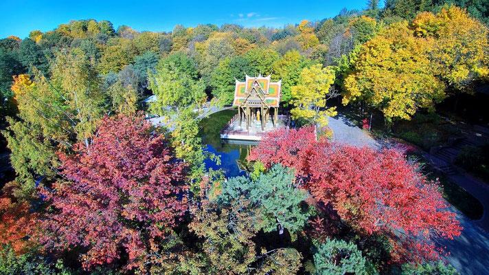 Vogelperspektive, Drohnenfoto, Drohnenbild, Luftaufnahme, Bayern, Bunt, Herbst, Bäume, München, Westpark
