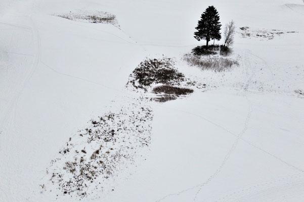 Vogelperspektive, Drohnenfoto, Drohnenbild, Schattenspiel, Luftaufnahme, Bayern, Feld, Weiss, Grün, Streifen, Bäume, Schatten, Muster, Flecken, Winter, Schnee