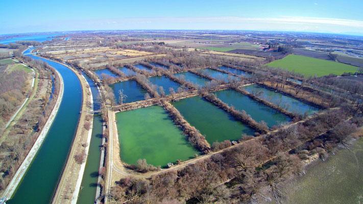 Drohnenfoto - Vogelperspektive - Drohne - Drohnenbild - Luftaufnahme - See