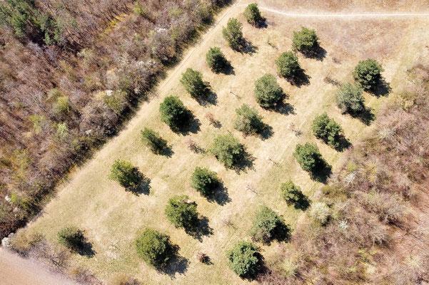 Vogelperspektive, Drohnenfoto, Drohnenbild, Schattenspiel, Luftaufnahme, Bayern, Feld, Braun, Streifen, Bäume, Schatten
