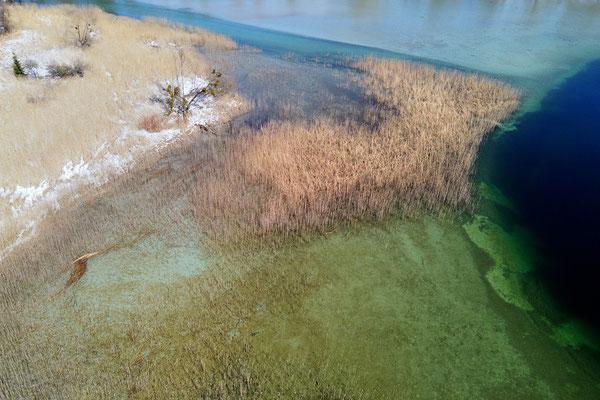Drohnenfoto - Landschaft - Grün - Türkis - Schilf - Vogelperspektive - Drohne - Drohnenbild - Luftaufnahme - See - Tegernsee