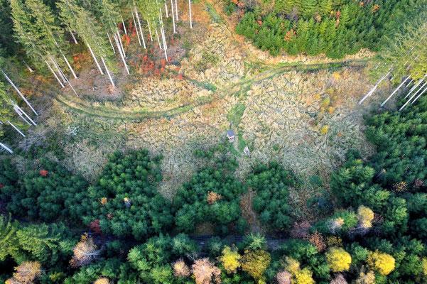 Vogelperspektive, Drohnenfoto, Drohnenbild, Luftaufnahme, München, Perlach, Wald, Bäume, Bunt