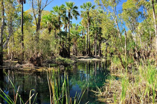 Australien, Australia, Nordaustralien, Northern Territory, Landschaft, See, Bitter Springs
