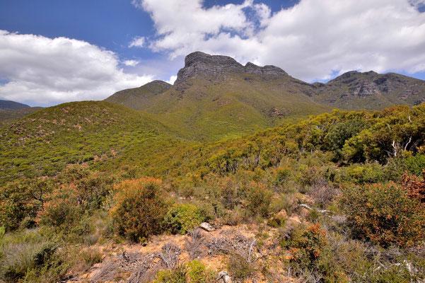 Australien, Australia, Westaustralia, Western Australia, Landschaft, Strasse,, Stirling Range National Park