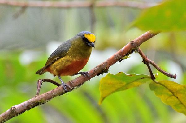 Pura Vida - Costa Rica - Fauna -  Vogel - Baum - Ast