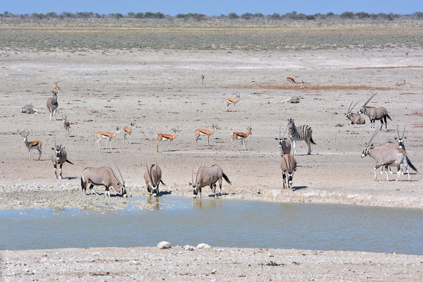 Namibia - Rundfahrt - Reise - Rundreise - Etosha National ParkNamibia