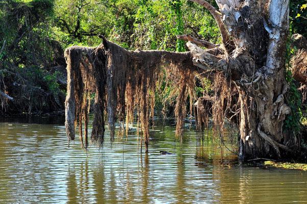 Australien, Australia, Nordaustralien, Northern Territory, Landschaft, See, Hochwasser, Kakadu National Park, Yellow Water River Cruise
