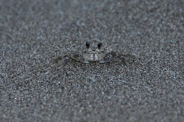Pura Vida - Costa Rica - Fauna - Krebs
