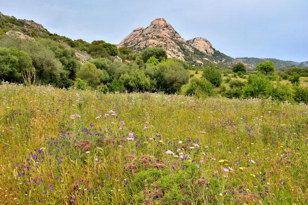 Sardinien, Sardegna, Landschaft, Berge, Parco Archeologico Arzachena / Nuraghe Albucciu