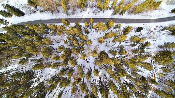 Drohnenfoto - Vogelperspektive - Drohne - Drohnenbild - Luftaufnahme - Straße - Wald - Winter