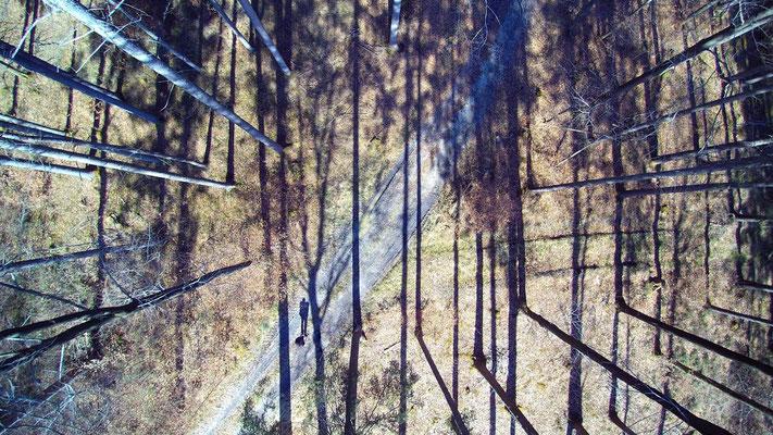 Vogelperspektive, Drohnenfoto, Drohnenbild, Schattenspiel, Luftaufnahme, Bayern, Feld, Grün, Streifen, Bäume, Schatten, Muster, Flecken, Wald