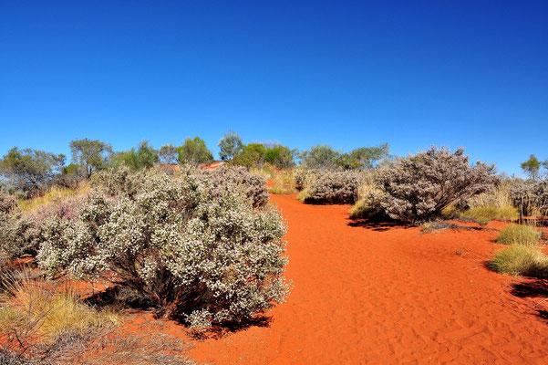 Australia - Australien -Zentralaustralien - Outback - Northern Territory - Landschaft - Rot - Sand - Ayers Rock - Uluru