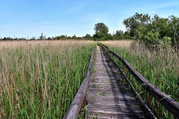 Litauen, Rundreise, Landschaft, Wanderung, Zuvinto Rezervatas, Biosphärenreservat