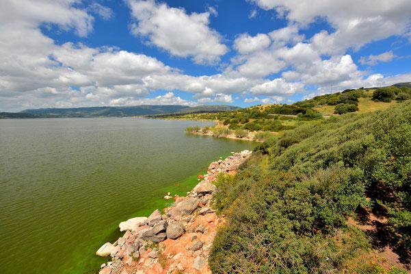 Sardinien, Sardegna, Landschaft, See, Küste, Ufer, Lago del Coghinas
