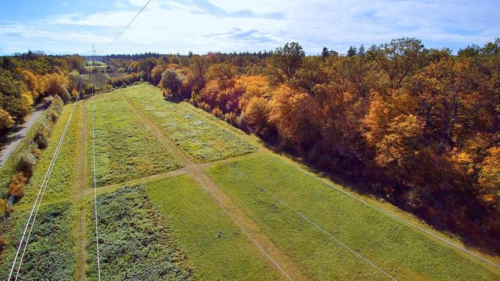 Vogelperspektive, Drohnenfoto, Drohnenbild, Luftaufnahme, Feld, Grün, Braun, Flecken, Wald, Strommast, Stromkabel, Sommer