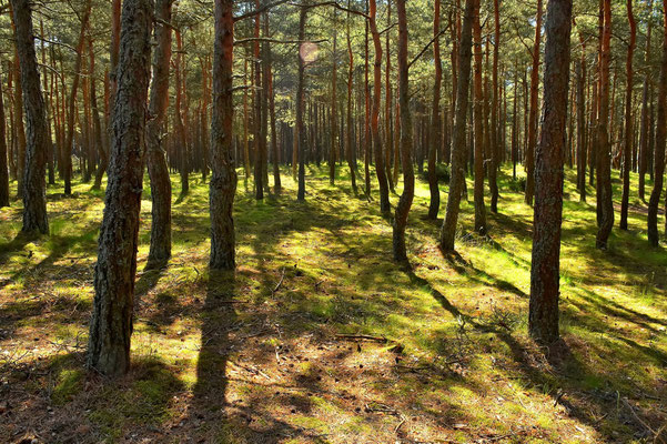 Litauen, Rundreise, Landschaft, Halbinsel Kurische Nehrung, Wanderdünen, Preila