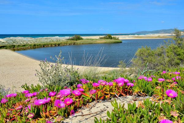 Sardinien, Sardegna, Landschaft, See, Küste, Bucht, Blumen, Valledoria