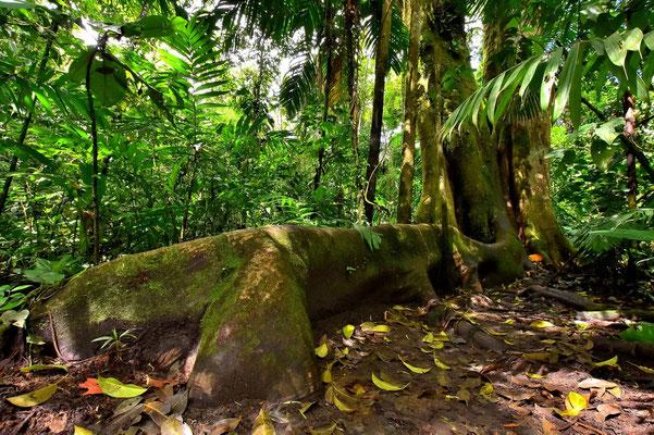 Pura Vida - Costa Rica - Pflanzen - Blumen - Bäume - Wald