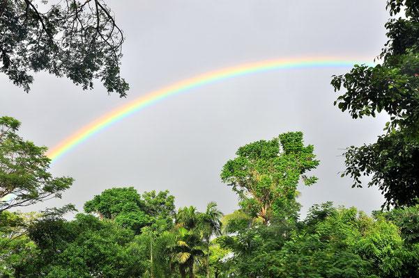 Australien, Australia, Ostaustralien, Ostküste, Queensland, Landschaft, Wald, Regenbogen, Atherton Tablelands