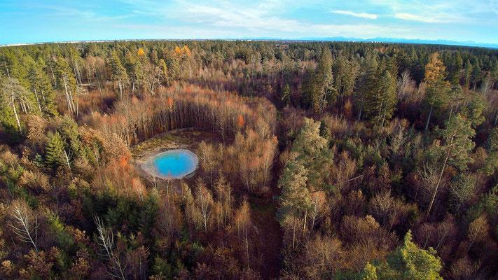 Vogelperspektive, Drohnenfoto, Drohnenbild, Luftaufnahme, Bäume, Wald von oben, Herbst, München, Perlacher Forst