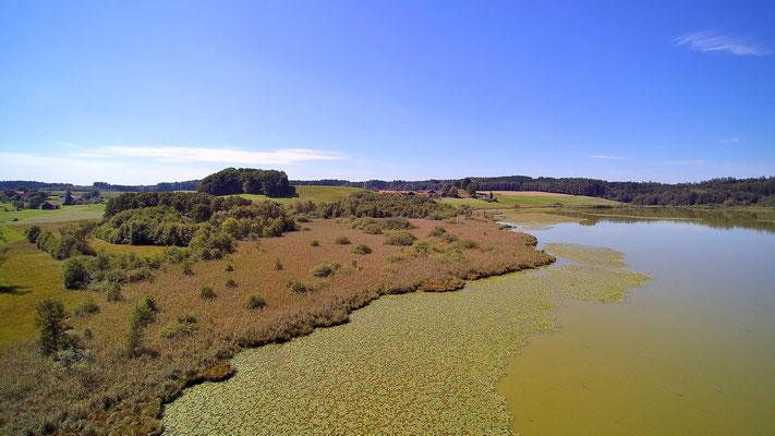 Drohnenfoto - Vogelperspektive - Drohne - Drohnenbild - Luftaufnahme - See - Braun - Herbst