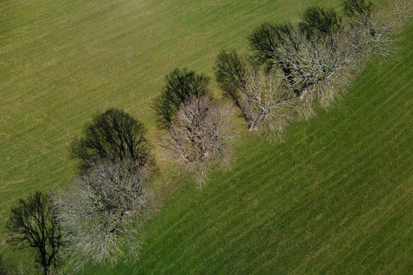 Vogelperspektive, Drohnenfoto, Drohnenbild, Luftaufnahme, Feld, Grün, Braun, Parzellen, Streifen, Flecken, Sommer, Acker, Bäume