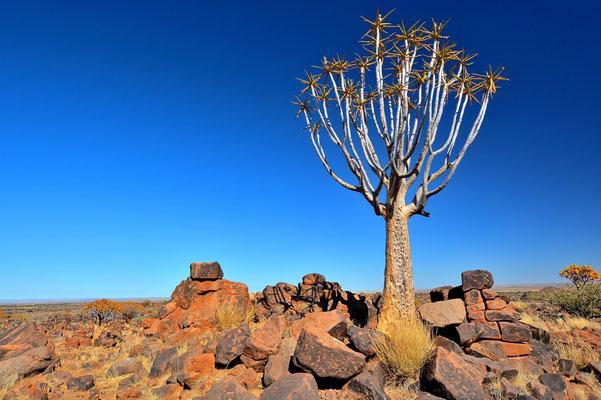 Namibia - Rundfahrt - Reise - Rundreise - Landschaft - Köcherbaumwald