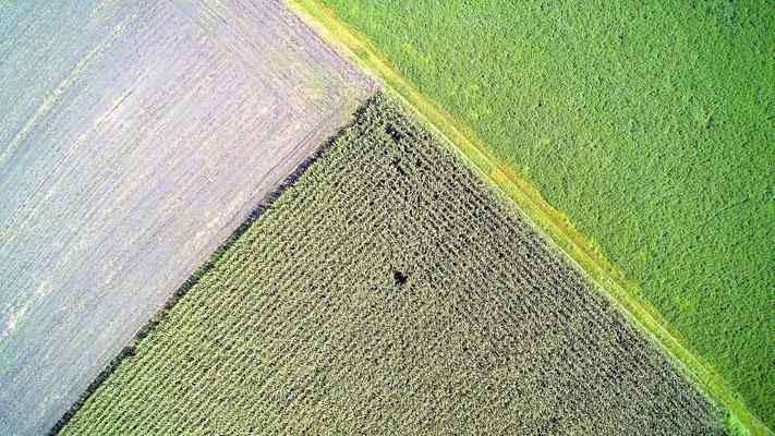 Vogelperspektive, Drohnenfoto, Drohnenbild, Schattenspiel, Luftaufnahme, Bayern, Feld, Weiss, Grün, Streifen, Bäume, Schatten, Muster, Flecken, Dreieck