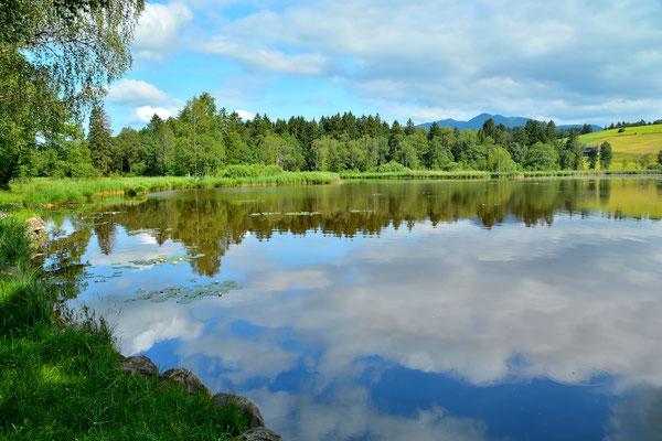 Bayern, Seen, Wanderung, Sommer, Spiegelung, Schwaigsee