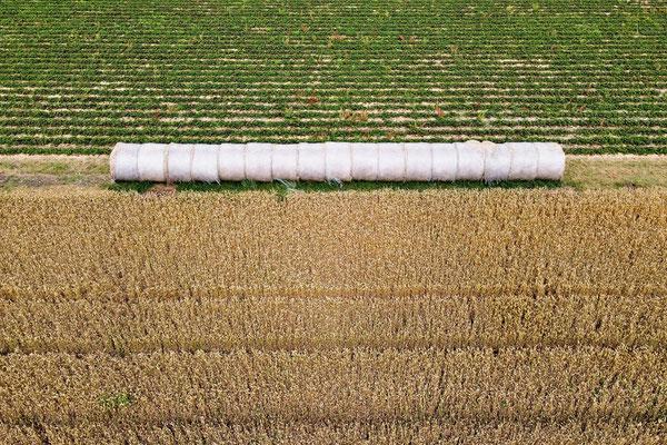 Vogelperspektive, Drohnenfoto, Drohnenbild, Luftaufnahme, Bayern, Feld, Grün, Braun, Getreide, Rollen, Streifen, Sommer