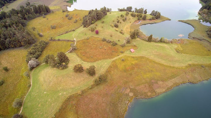 Vogelperspektive, Drohnenfoto, Drohnenbild, Luftaufnahme, Feld, Grün, Braun, Flecken, Wald, See, Sommer