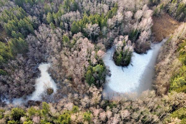 Drohnenfoto - Vogelperspektive - Drohne - Drohnenbild - Luftaufnahme - Winter - Wald - See - Eis - Insel - Isen