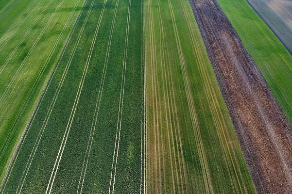 Vogelperspektive, Drohnenfoto, Drohnenbild, Luftaufnahme, Bayern, Feld, Landwirtschaft, Reihen, Acker