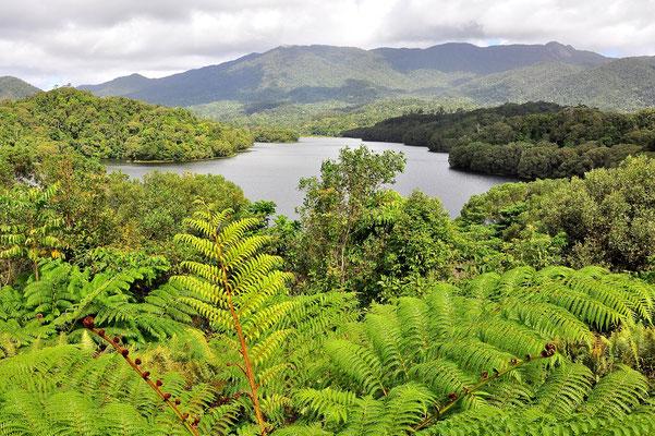 Australien, Australia, Ostaustralien, Ostküste, Queensland, Landschaft, Regenwald, Cairns Water Reserve