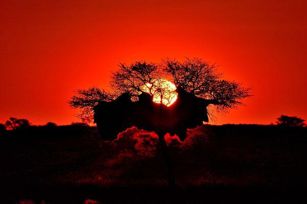 Namibia - Rundfahrt - Reise - Rundreise - Landschaft - Kalahari - Sonnenuntergang - Silhouette