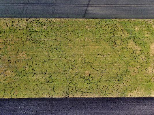 Vogelperspektive, Drohnenfoto, Drohnenbild, Schattenspiel, Luftaufnahme, Feld, Grün, Grau, Streifen, Schatten, Muster, Flecken