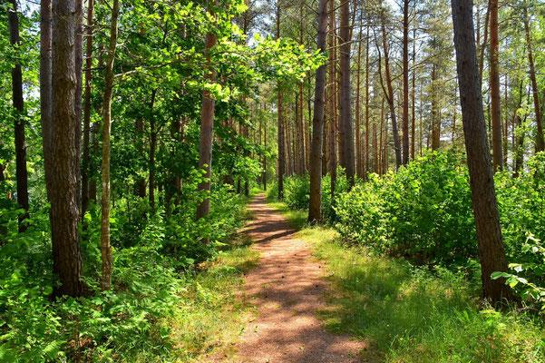 Litauen, Rundreise, Landschaft, Wanderung, See, Wald, Aukštaitija National Park