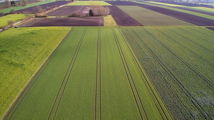 Vogelperspektive, Drohnenfoto, Drohnenbild, Luftaufnahme, Bayern, Feld, Grün, Braun, Streifen, Sommer