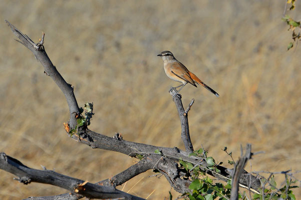 Namibia - Rundfahrt - Reise - Rundreise - Etosha National Park - Vogel
