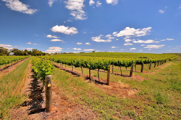 Australien, Australia, Südaustralien, South Australia, Landschaft, Weinbau, Weinberg, Barossa Valey