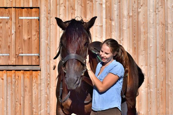 Noriker Pferde, Tierfotografie, Outdoor