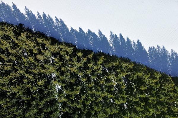 Vogelperspektive, Drohnenfoto, Landschaft, Drohnenbild, Schattenspiel, Luftaufnahme, Feld, Wald, Schnee, Streifen, Bäume, Schatten, Muster, Flecken