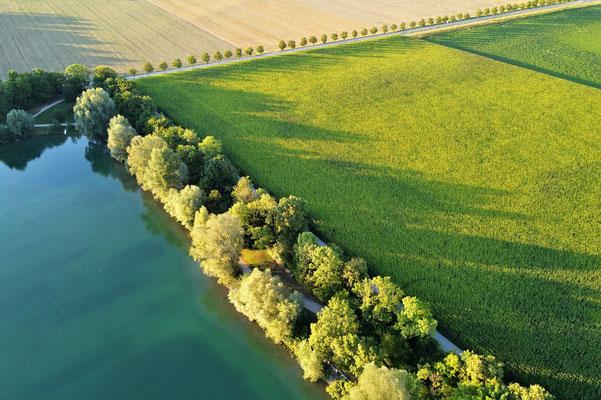 Vogelperspektive, Drohnenfoto, Drohnenbild, Luftaufnahme, Bayern, Feld, Landwirtschaft, Bäume, Reihe