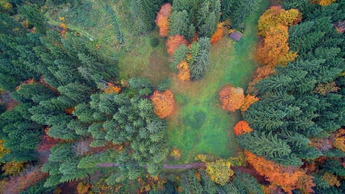 Vogelperspektive, Drohnenfoto, Drohnenbild, Luftaufnahme, Bäume, Wald von oben, Herbst