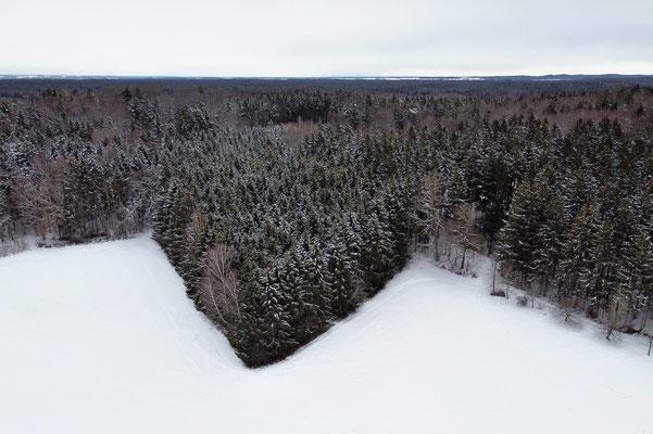 Vogelperspektive, Drohnenfoto, Drohnenbild, Luftaufnahme, Ebersberg, Winter, Schnee, Wald