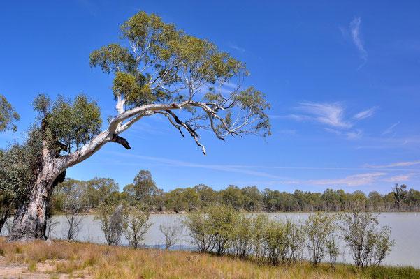 Australien, Australia, Südaustralien, South Australia, Landschaft, Fluss, Morgan
