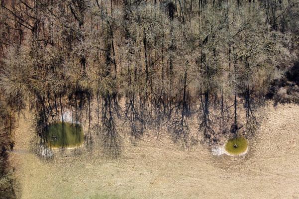 Vogelperspektive, Drohnenfoto, Drohnenbild, Luftaufnahme, Landschaft, Bayern, Alpen, Herbstlich, Wald, Schatten, Tümpel, Aschheim