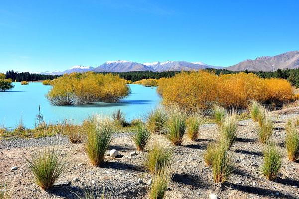 Neuseeland, Südinsel, Lake Alexandrina