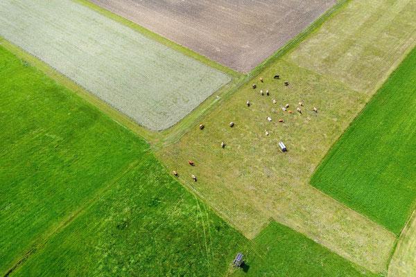 Vogelperspektive, Drohnenfoto, Drohnenbild, Luftaufnahme, Bayern, Feld, Grün, Braun, Streifen, Flecken, Parzellen, Sommer